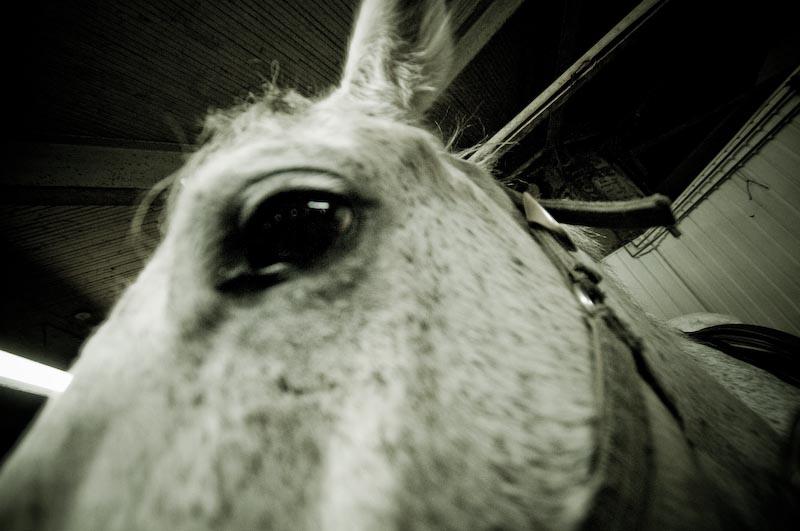Horse Sutton 019-k