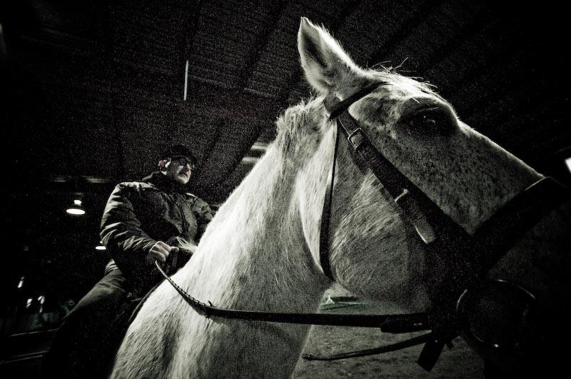 Horse Sutton 025-k