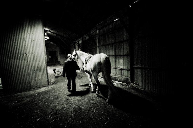 Horse Sutton 030-k